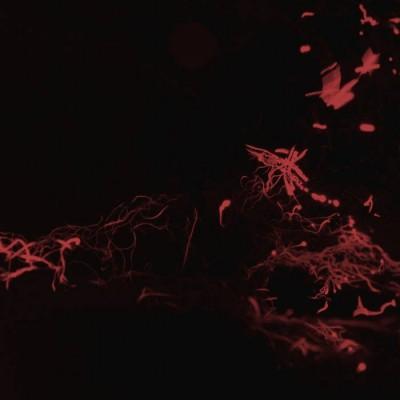 Svarte Greiner - Moss Garden [Miasmah]